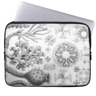 Protection Pour Ordinateur Portable Éponges d'Ernst Haeckel Hexactinellae