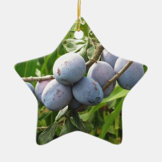 Prunes pourpres accrochant sur l'arbre. La Ornement Étoile En Céramique