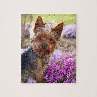 Puzzel van de de hond de mooie foto van Yorkshire  Puzzel