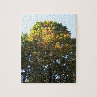 Puzzle Arbre d'érable d'automne