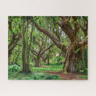 Puzzle Arbres de forêt tropicale