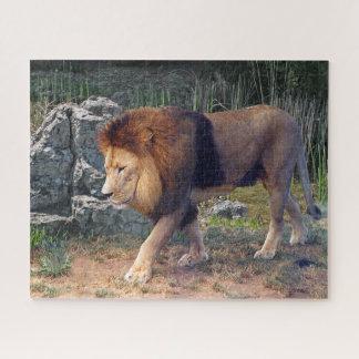 Puzzle Beau lion marchant parmi des roches -
