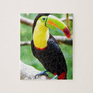Puzzle Beau toucan