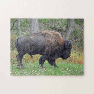 Puzzle Bison américain en automne tôt
