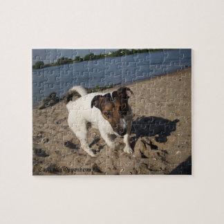 Puzzle Capo von Oppenheim, chien de Jack Russell Terrier