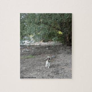 Puzzle Capo von Oppenheim Jack Russell Terrier, chien