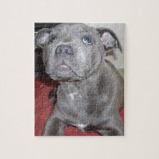 Puzzle Chiot bleu de bull-terrier du Staffordshire,