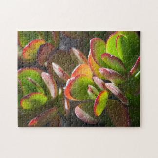 Puzzle de Succulents
