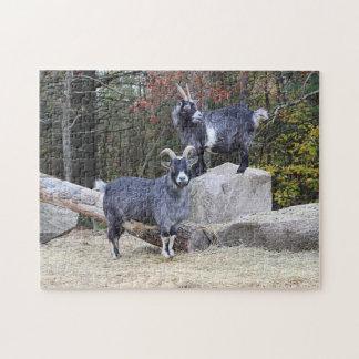 Puzzle Deux chèvres