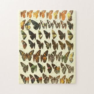 Puzzle Diagramme vintage d'espèces de papillon