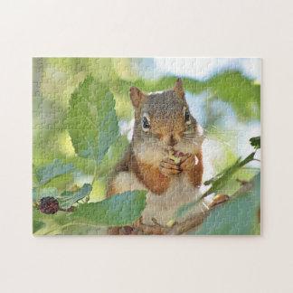 Puzzle Écureuil rouge