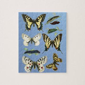 Puzzle Étapes pendant la vie des papillons