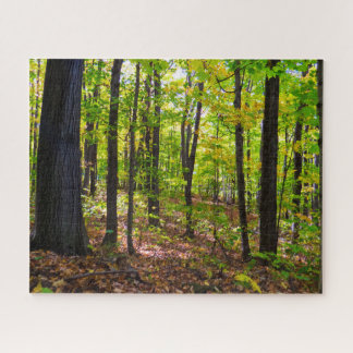 Puzzle Forêt vibrante