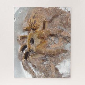 Puzzle Grande araignée de babouin de klaxon