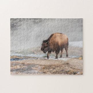 Puzzle Jeune bison ou Buffalo beau