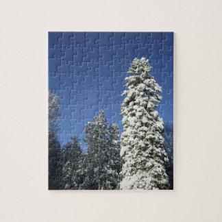 Puzzle La neige a couvert des pins