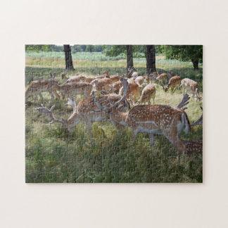 Puzzle Le troupeau de cerfs communs dans une photo de