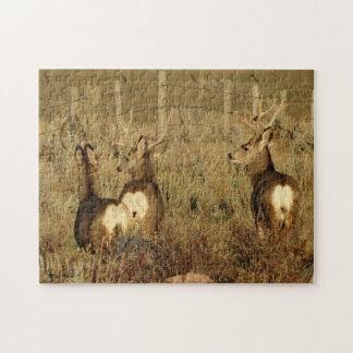 Puzzle Mâles de cerfs communs de mule D0030