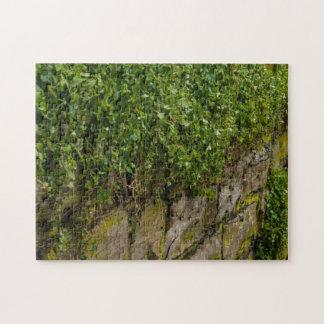 Puzzle Mur de lierre