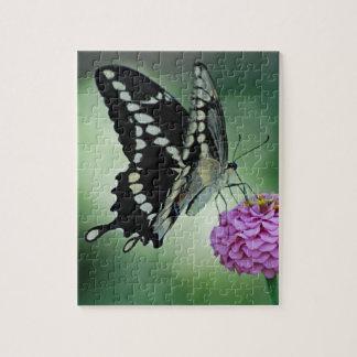 Puzzle noir de papillon de machaon