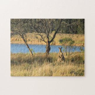 Puzzle Observation de kangourou