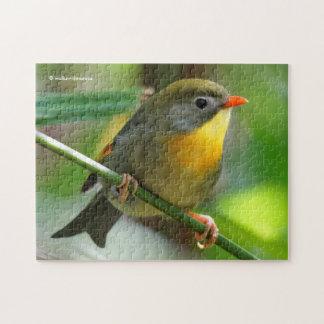 Puzzle Oiseau chanteur coloré de Leiothrix/Pekin Robin