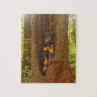 Puzzle Oscar dans un arbre