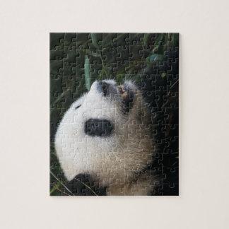 Puzzle Panda géant dans la forêt en bambou