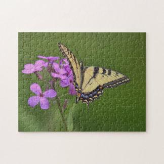 Puzzle Papillon oriental de machaon de tigre