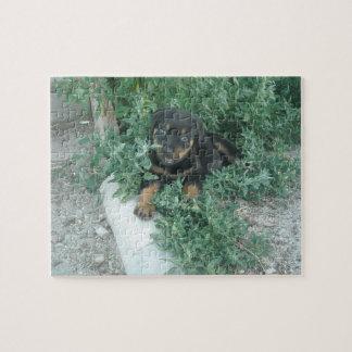 Puzzle Photo de chiot de rottweiler