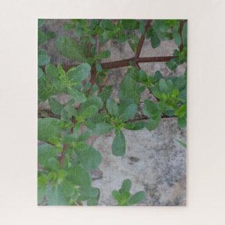 Puzzle Pierre et plantes