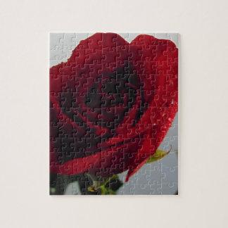 Puzzle Plaisir de rose rouge