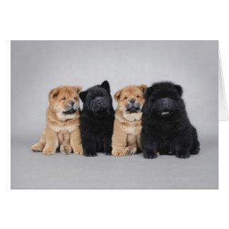 Quatre petits chiots de bouffe de bouffe carte de vœux