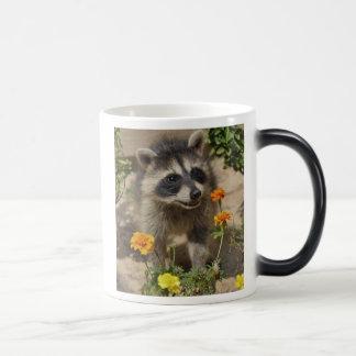 Raccooon - tasse Morphing