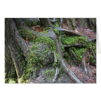 Racines d'arbre dans la carte de forêt