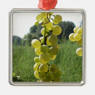 Raisins blancs sur la vigne. La Toscane, Italie Ornement Carré Argenté