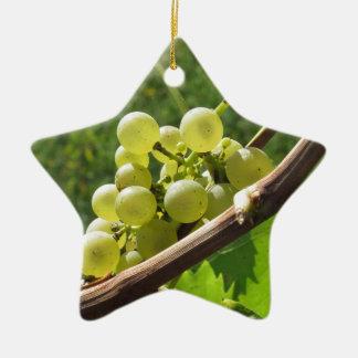 Raisins blancs sur la vigne. La Toscane, Italie Ornement Étoile En Céramique