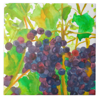 Raisins de cuve pourpres d'aquarelle carreau