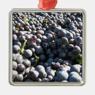 Raisins de vignoble de vin ornement carré argenté