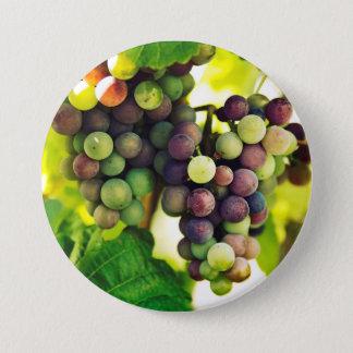 Raisins merveilleux de vigne, nature, automne Sun Badge Rond 7,6 Cm