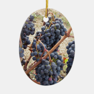 Raisins rouges sur la vigne. La Toscane, Italie Ornement Ovale En Céramique