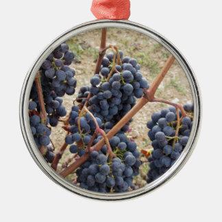 Raisins rouges sur la vigne. La Toscane, Italie Ornement Rond Argenté