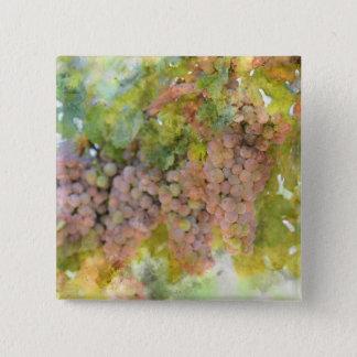 Raisins sur la vigne prête à faire le vin badge carré 5 cm
