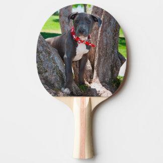 Raquette De Ping Pong Chiot de bull-terrier du Staffordshire dans un