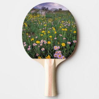Raquette De Ping Pong L'Amérique du Nord, Etats-Unis, Wyoming,