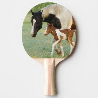 Raquette De Ping Pong Les Etats-Unis, la Floride, pouliche nouveau-née