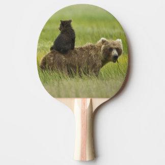 Raquette De Ping Pong Parc national de Clark des Etats-Unis, Alaska,