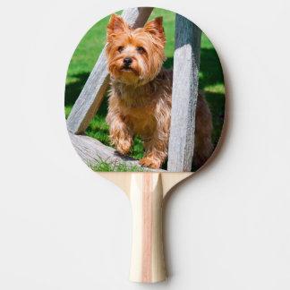Raquette De Ping Pong Yorkshire Terrier se tenant dans des roues