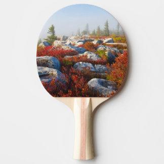 Raquette Tennis De Table Automne de région sauvage de gazons de chariot