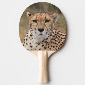 Raquette Tennis De Table Beau portrait de guépard